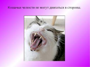 Кошачьи челюсти не могут двигаться в стороны.