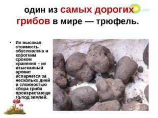 один из самых дорогих грибов в мире — трюфель. Их высокая стоимость обусловле