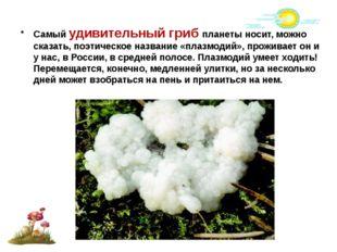 Самый удивительный гриб планеты носит, можно сказать, поэтическое название «п
