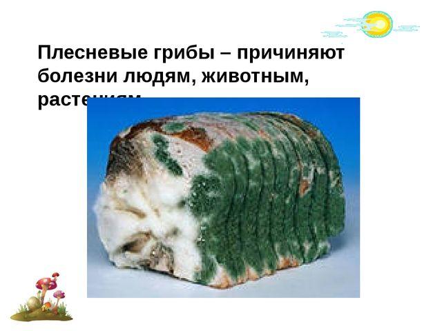 Плесневые грибы – причиняют болезни людям, животным, растениям.