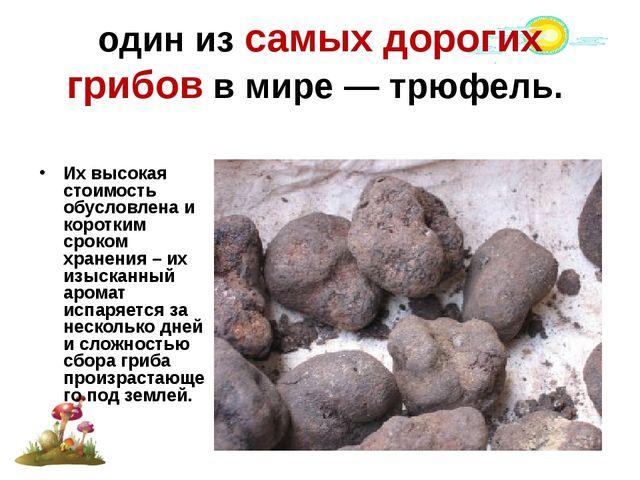 один из самых дорогих грибов в мире — трюфель. Их высокая стоимость обусловле...