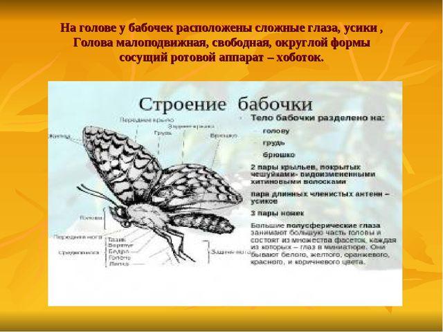 На голове у бабочек расположены сложные глаза, усики , Голова малоподвижная,...