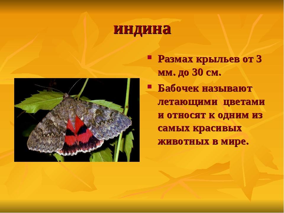 индина Размах крыльев от 3 мм. до 30 см. Бабочек называют летающими цветами и...