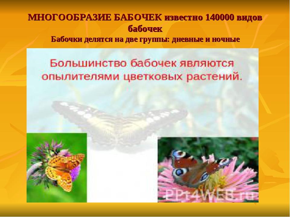 МНОГООБРАЗИЕ БАБОЧЕК известно 140000 видов бабочек Бабочки делятся на две гру...