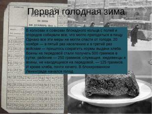 В колхозах и совхозах блокадного кольца с полей и огородов собирали все, что