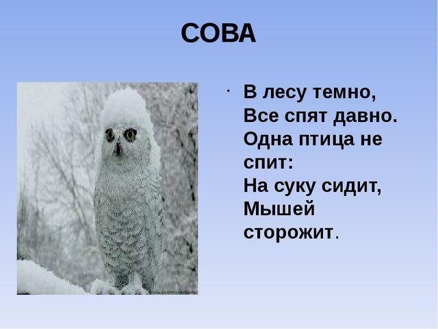 СОВА В лесу темно, Все спят давно. Одна птица не спит: На суку сидит, Мышей с...