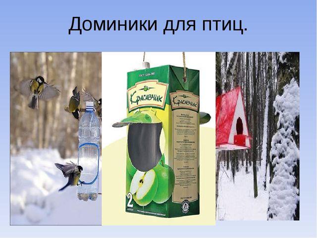 Доминики для птиц.