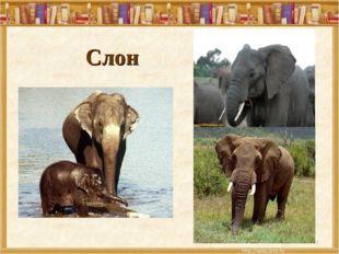 Слон *