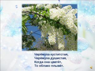 Черёмуха куститстая, Черёмуха душистая, Когда она цветёт, То облако плывёт.