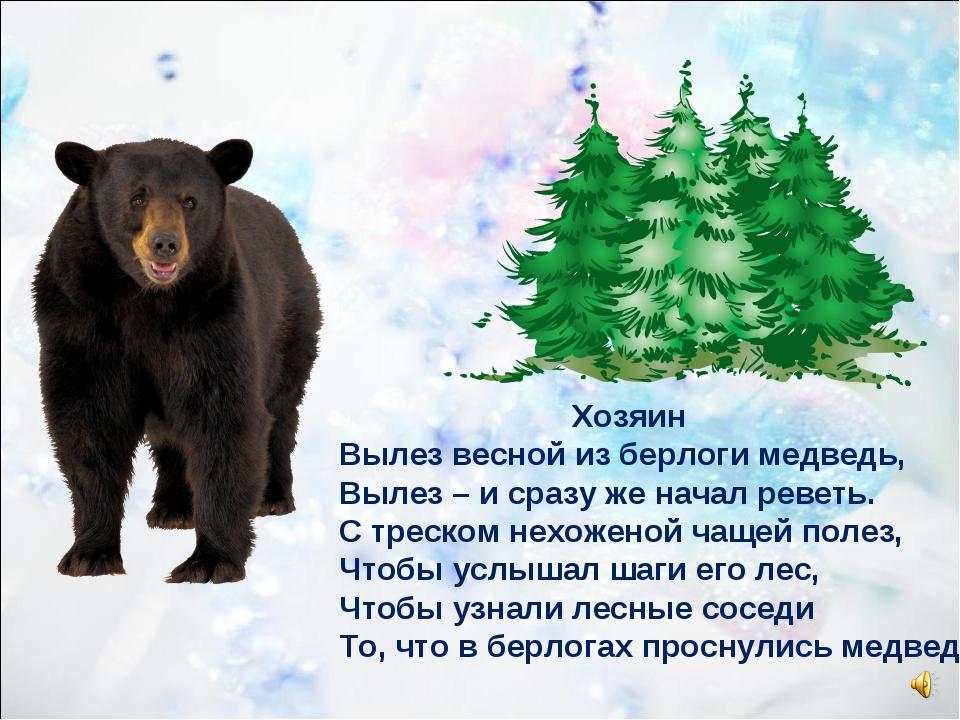 Хозяин Вылез весной из берлоги медведь, Вылез – и сразу же начал реветь. С т...