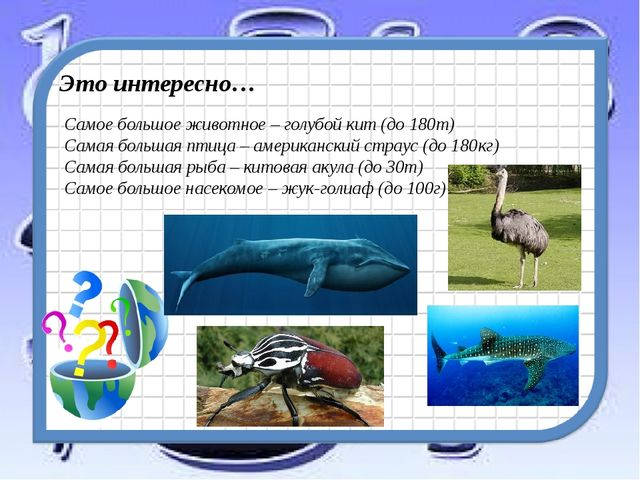 Это интересно… Самое большое животное – голубой кит (до 180т) Самая большая п...