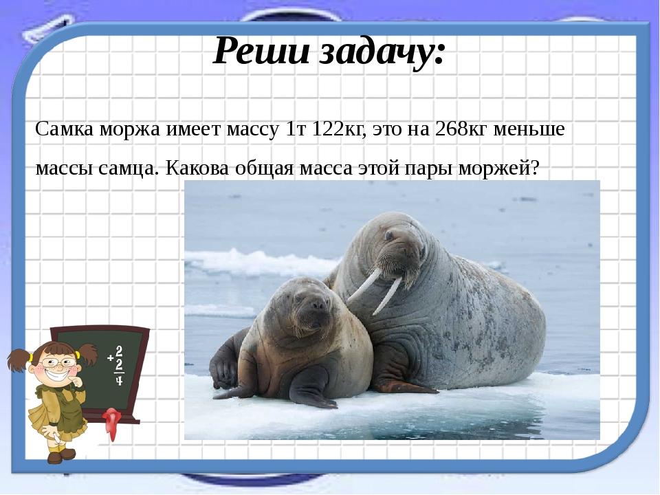 Реши задачу: Самка моржа имеет массу 1т 122кг, это на 268кг меньше массы самц...