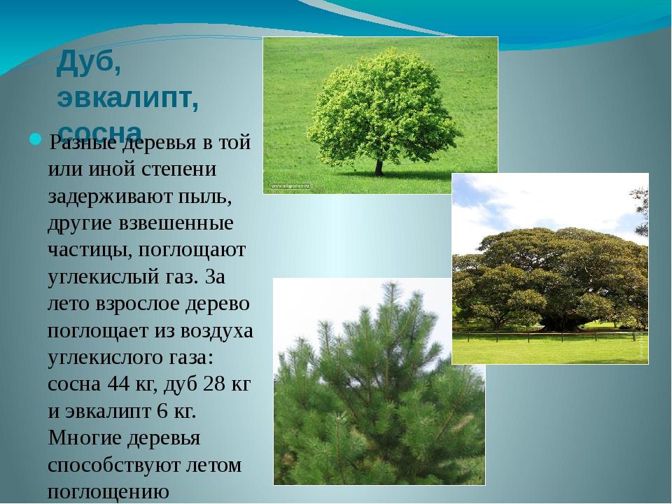 Дуб, эвкалипт, сосна Разные деревья в той или иной степени задерживают пыль,...