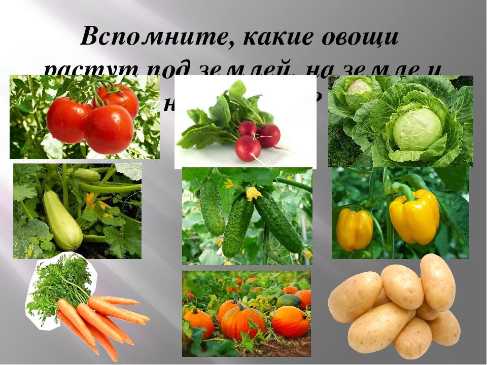 Вспомните, какие овощи растут под землей, на земле и над землей?