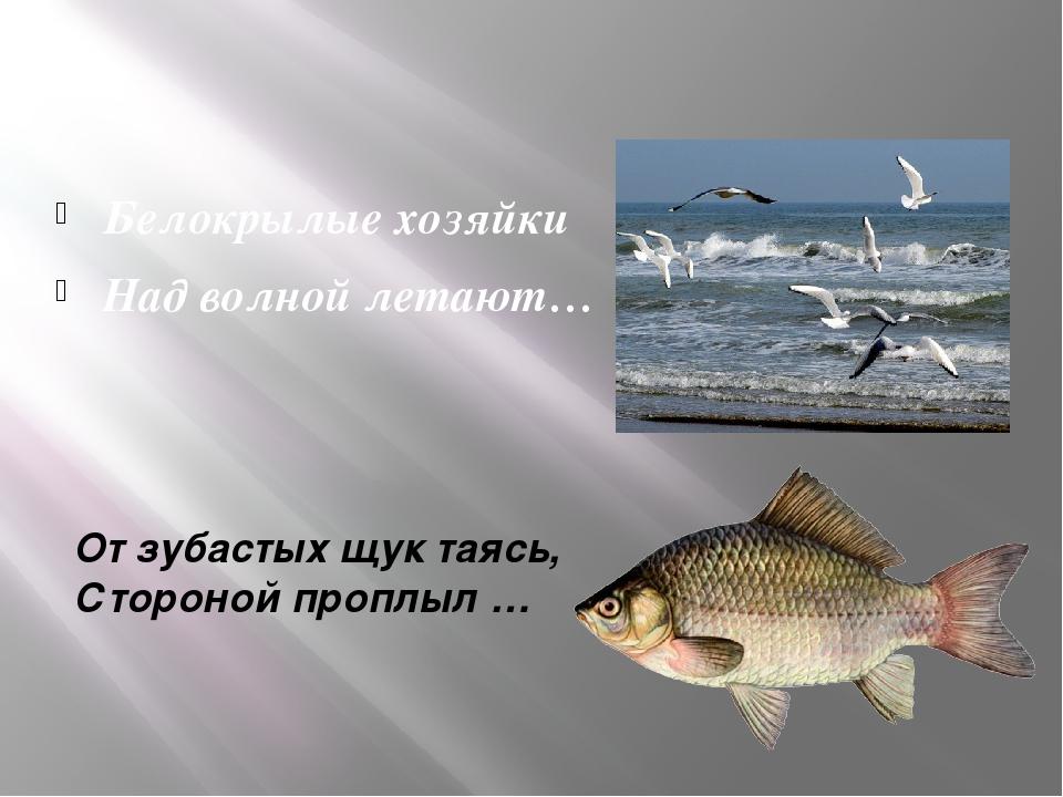 От зубастых щук таясь, Стороной проплыл … Белокрылые хозяйки Над волной летают…
