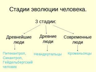 Стадии эволюции человека. 3 стадии: Древнейшие люди Древние люди Современные