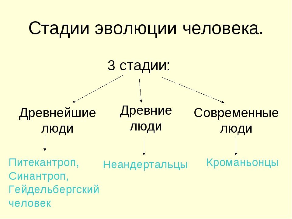 Стадии эволюции человека. 3 стадии: Древнейшие люди Древние люди Современные...