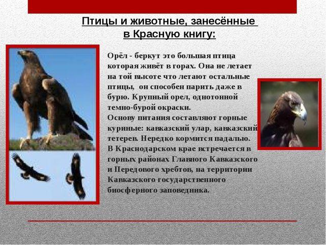Slide 9 on this slide you can see: животные которые занесины в красную книгу