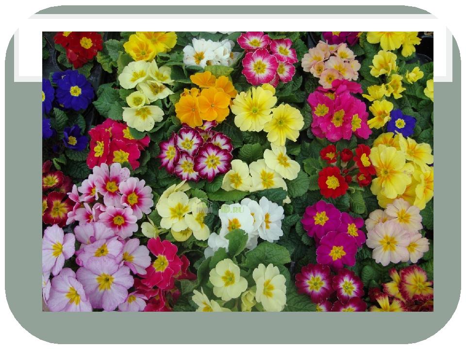 На декоративные растения тему презентацию