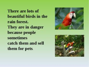 There are lots of beautiful birds in the rain forest. They are in danger beca