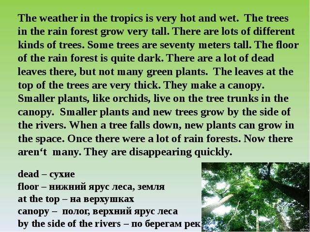 The weather in the tropics is very hot and wet. The trees in the rain forest...