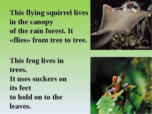 This frog lives in trees. It uses suckers on its feet to hold on to the leave...