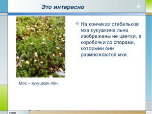 Это интересно На кончиках стебельков мха кукушкина льна изображены не цветки