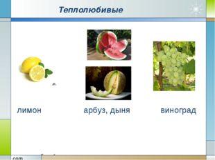Теплолюбивые лимон арбуз, дыня виноград