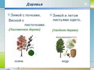 Деревья Зимой с почками, Весной с листочками. Зимой и летом листьями одето.