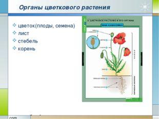 Органы цветкового растения цветок(плоды, семена) лист стебель корень