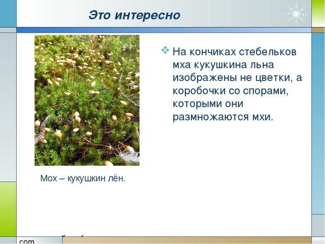 Это интересно На кончиках стебельков мха кукушкина льна изображены не цветки...