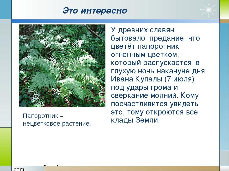 Это интересно У древних славян бытовало предание, что цветёт папоротник огне...