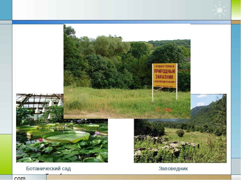 Ботанический сад Заповедник