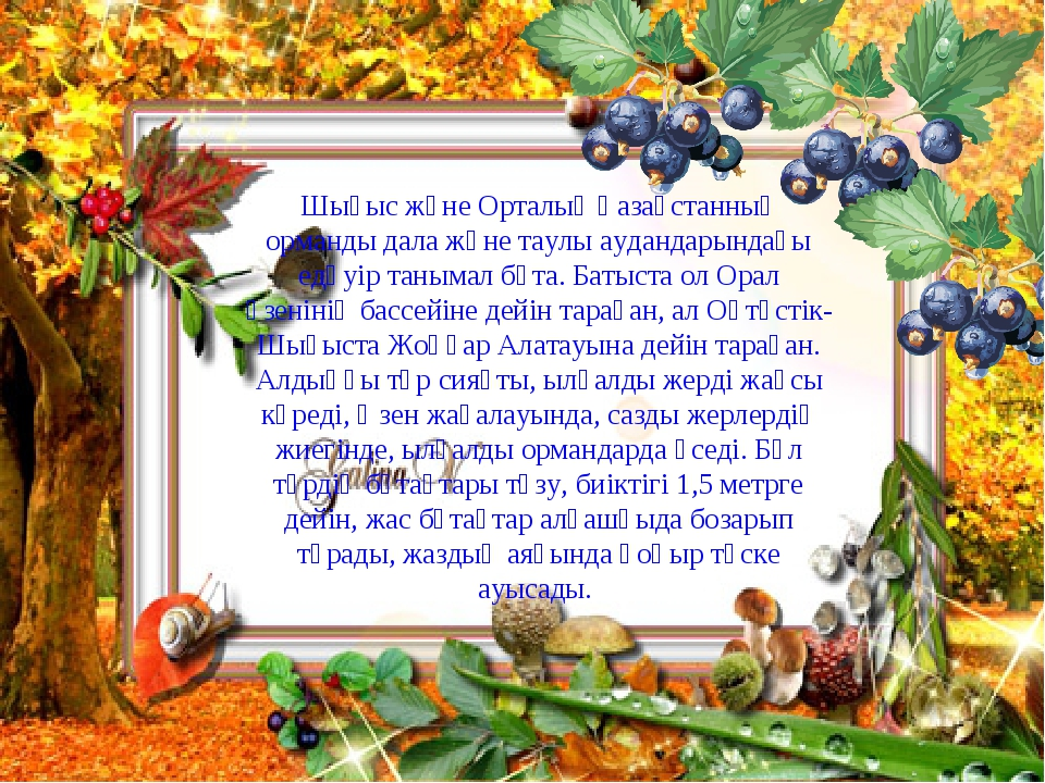 Шығыс және Орталық Қазақстанның орманды дала және таулы аудандарындағы едәуір...