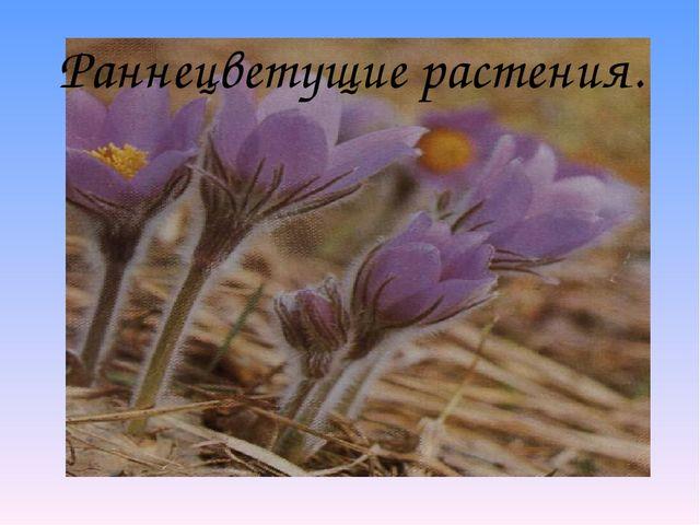 Раннецветущие растения.