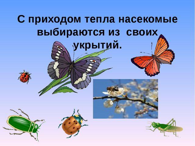 С приходом тепла насекомые выбираются из своих укрытий.
