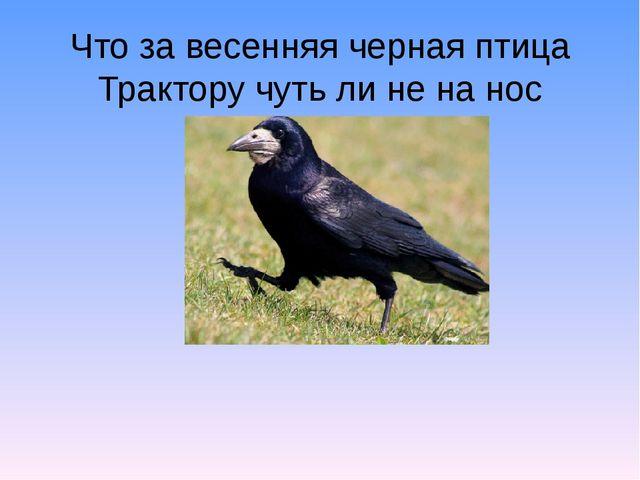 Что за весенняя черная птица Трактору чуть ли не на нос садится? В березовой...