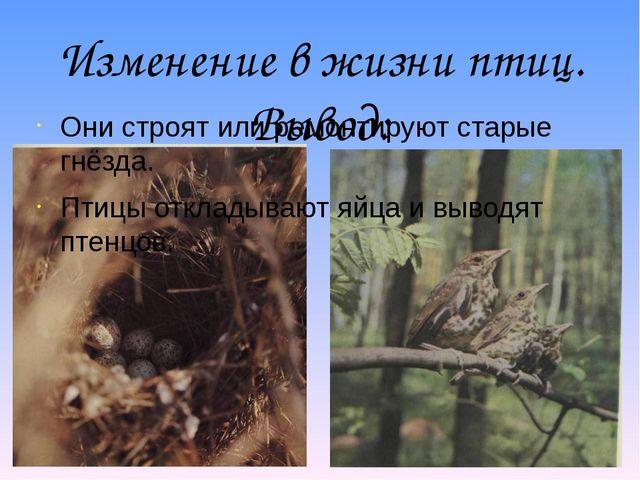 Изменение в жизни птиц. Вывод: Они строят или ремонтируют старые гнёзда. Птиц...