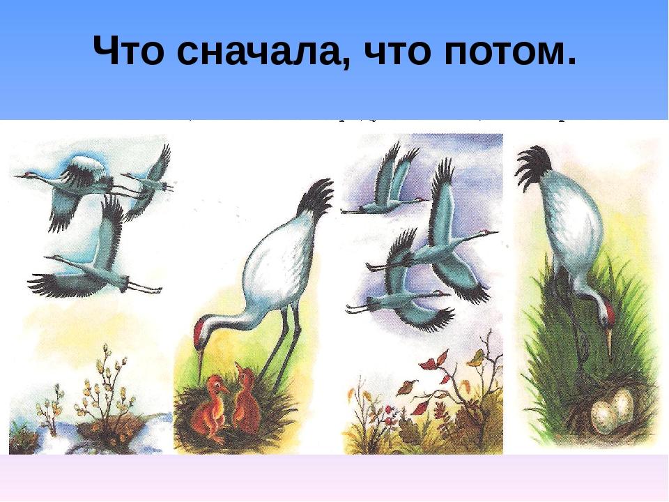Сюжетные картинки перелетные птицы