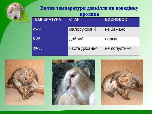 Вплив температури довкілля на поведінку кролика  ТЕМПЕРАТУРАСТАНВИСНОВОК 2...