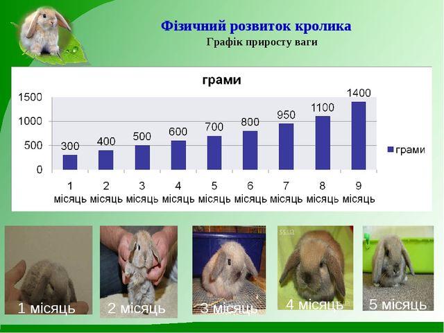 Фізичний розвиток кролика Графік приросту ваги 1 місяць 2 місяць 3 місяць 4 м...
