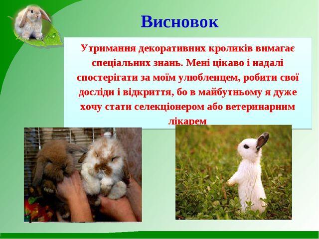 Висновок Утримання декоративних кроликів вимагає спеціальних знань. Мені цік...