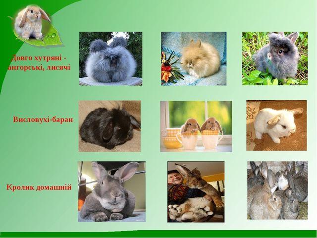 Довго хутряні - ангорські, лисячі Висловухі-баран Кролик домашній