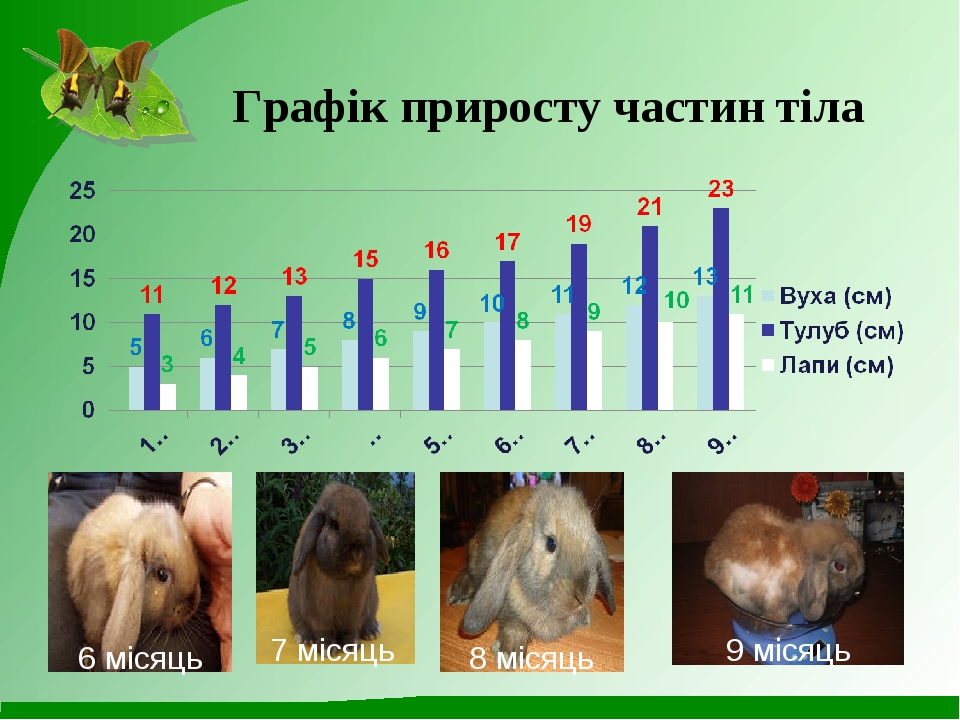 Графік приросту частин тіла 6 місяць 7 місяць 8 місяць 9 місяць