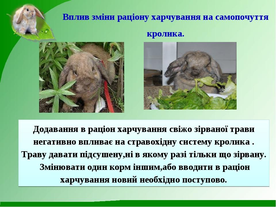 Вплив зміни раціону харчування на самопочуття кролика. Додавання в раціон хар...