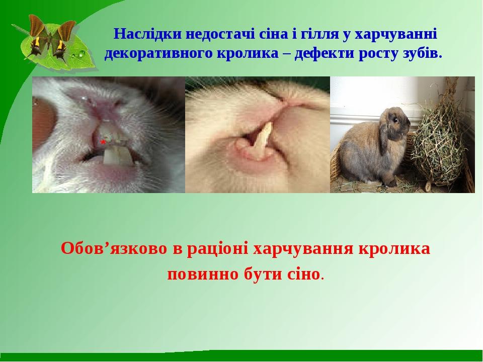 Наслідки недостачі сіна і гілля у харчуванні декоративного кролика – дефекти...