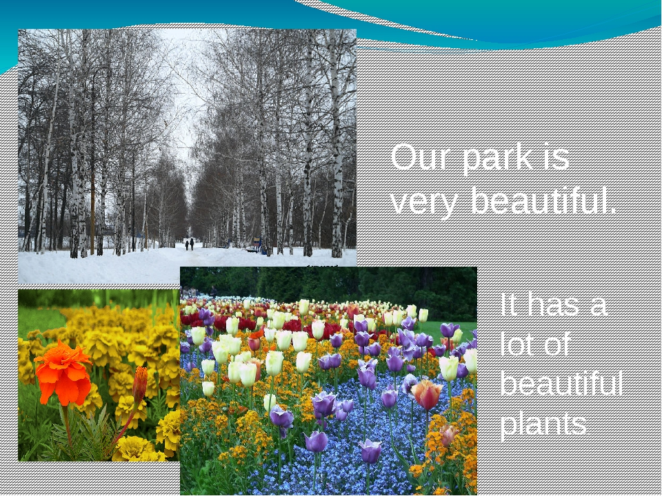Our park is very beautiful. It has a lot of beautiful plants.
