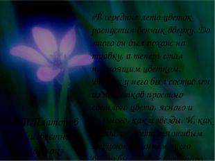 «В середине лета цветок распустил венчик вверху. До этого он был похож на тра