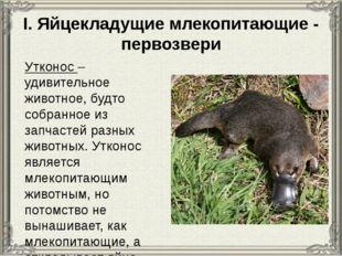I. Яйцекладущие млекопитающие - первозвери Утконос – удивительное животное, б
