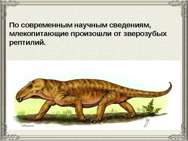 По современным научным сведениям, млекопитающие произошли от зверозубых репти...